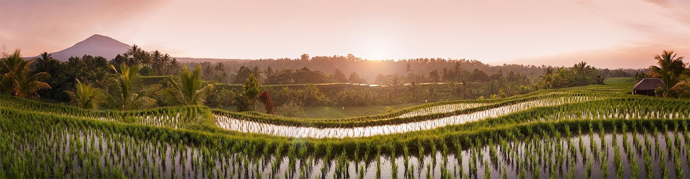 Landschaft auf Bali Reisfelder