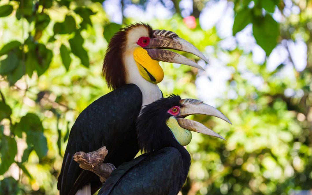 Der Bali Bird Park – Seltene Vögel in natürlicher Umgebung