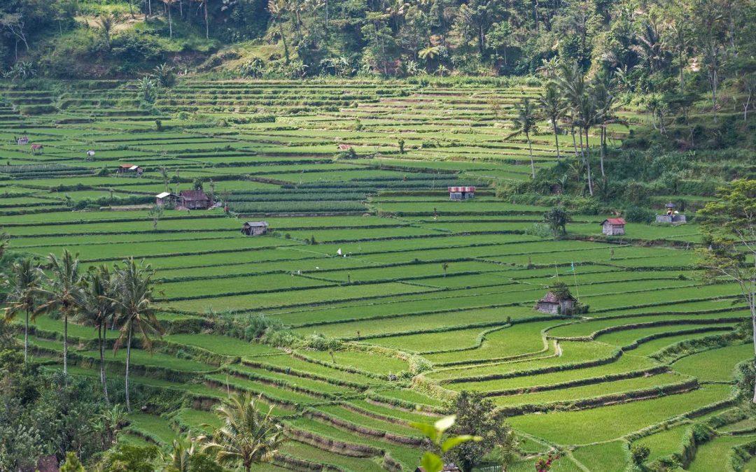 Die Tegallalang Reisterrassen auf Bali