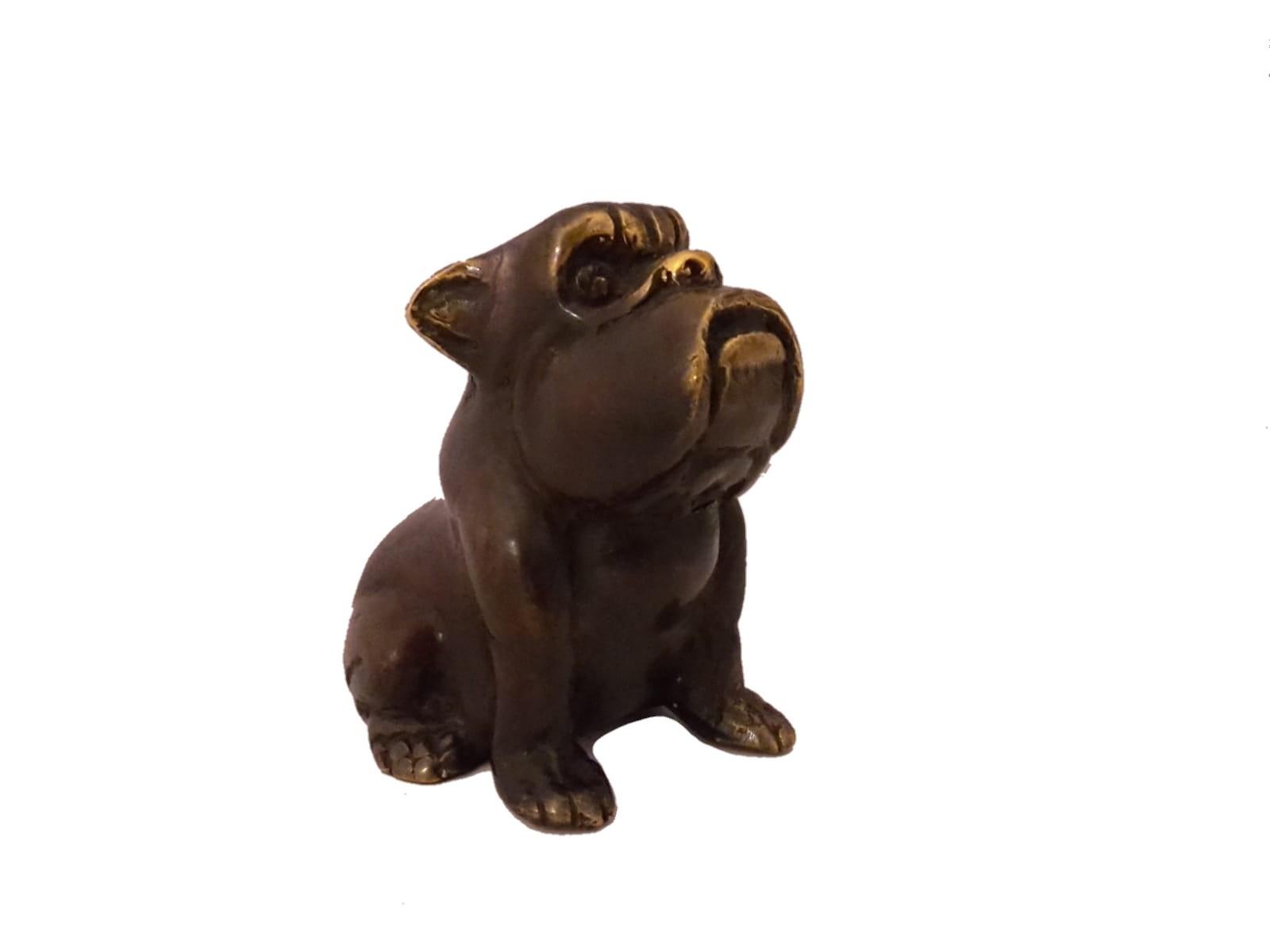 Bulldogge, klein