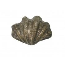 Muschel, kleine Shellmuschel