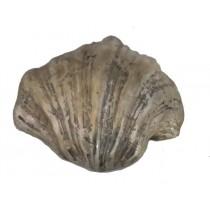 Muschel, Shell versilbert