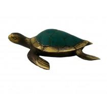 Wasserschildkröte, kurze Flossen