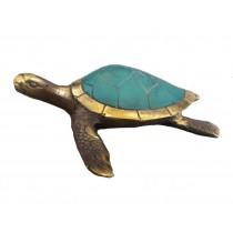 Wasserschildkröte mit langen Flossen