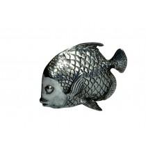 Fisch, kleiner Kaiserfisch